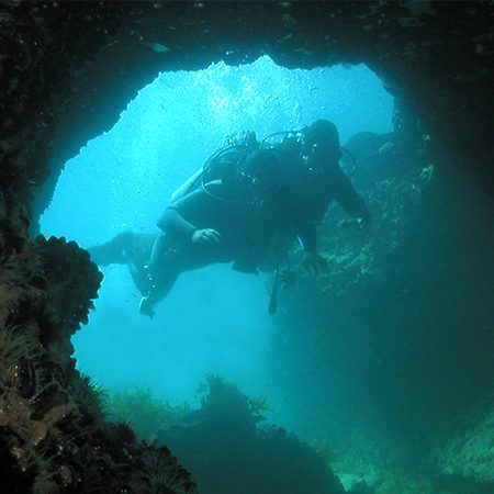 BUCEO-450X450-1